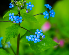Helping Color,s. (Omygodtom) Tags: bokeh blue outside nature wildflower natural d7100 tamron macro dof perspective contrast coth5 7dwf happy