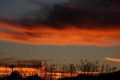 Sunset 12 23 18 #06 (Az Skies Photography) Tags: sunset sun set dusk twilight nightfall sky skyline skyscape cloud clouds red orange yellow gold golden salmon black december 23 2018 december232018 122318 12232018 rio rico arizona az rioricoaz arizonasky riorico arizonaskyline arizonaskyscape canon eos 80d canoneos80d canon80d eos80d