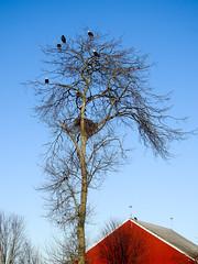 The main Eagle Tree (glenbodie) Tags: bodie catherinehurley glen glenbodie north40 reifel