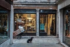 On duty (Caffe_Paradiso) Tags: dog venice venizia venise