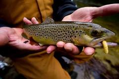 bugeater (Fishbarbarian) Tags: troutfishing rainyday wilsonscreek northcarolina