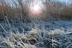 Frost (Elisa1880) Tags: vorst frost winter kristallen crystals grass gras rijp ijs ice