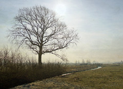 one frosty morning (kelsk) Tags: vockestaertpolder polder delft kelskphotography winter frost vorst ochtend zon morning sun texture boom weiland field