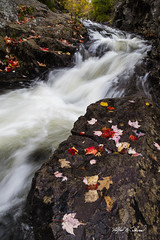 Duck Brook_27A7443 (Alfred J. Lockwood Photography) Tags: alfredjlockwood nature landscape river duckbrook rushingwater autumn autumnalcolor autumncolor fallcolor fallfoliage rocks acadianationalpark morning maine leaves