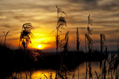 Sunset in the lake (Lux Populi) Tags: sun sunset lake water vegetation nature landscape backlighting silhouettes sky reflexes