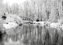 Snow on the Bridge (Mr.LeeCP) Tags: snow winter trees cold washington
