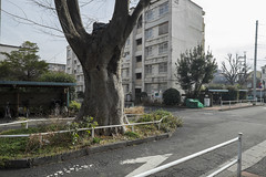 Tokyo.世田谷区下馬 下馬ハイム前 (iwagami.t) Tags: iwagamitetsuo 201902 fujifilm fuji xt1 xf14mm japan tokyo city town urban street apartment tree