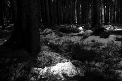 in between IV (lucky5.1) Tags: wald wood winter snow schnee schneereste sw bw