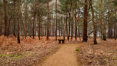 On Horsell Common-M2165440 (tony.rummery) Tags: common epm1 horsell mft microfourthirds olympus pen path surrey trees winter woking