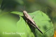 Middle Creek SWR (376) (Framemaker 2014) Tags: middle creek wildlife refuge stevens pennsylvania fish game commision lancaster county united states america