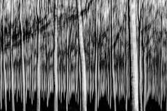 Alterazioni (Danilo Mazzanti) Tags: danilomazzanti danilo mazzanti wwwdanilomazzantiit fotografia foto fotografo photos photography biancoenero blackandwhite impressionismo drammatico