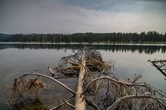 0624-J20 - Yellowstone - Cody-1808160943 (Chouettes de Crolles) Tags: 2018usa 2018usaj20yellowstonecody cody lieux usa vacancesété wyoming étatsunis us