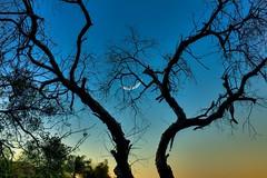IMG_6868 (rainb0wspirit) Tags: arboles arbor art arte atardecer cielo landscape luna moon naturaleza nature paisaje sky sunset trees