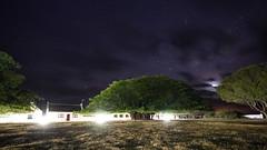 Fig Tree at night (Geonaut) Tags: dehoopnaturereserve gardenroute gartenrute südafrika za