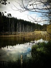Waldsee bei Ebersdorf bei Coburg (Maquarius) Tags: see bäume wald oberfranken franken landschaft reflexion spiegelung ebersdorf bei coburg