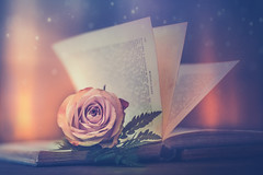 Rose (Ro Cafe) Tags: edge80 lensbaby rose sonya7iii stilllife book flower textured