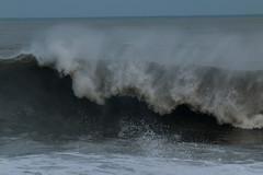 IMG_0705 (monika.carrie) Tags: monikacarrie wildlife scotland aberdeen waves