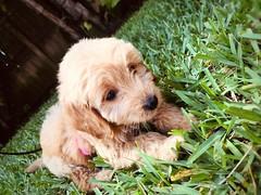 Jessie loving the grass