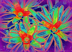 Deja Vu (Rollingstone1) Tags: dejavu flowers spring colour vivid psychedelic dream red green blue rgb vision art artwork