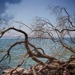 Scarborough Bluffs - Toronto Ontario - Canada - Lake Ontario thumbnail
