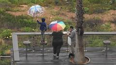 Зонтики (unicorn7unicorn) Tags: пляж люди зонтик wah 365the2019edition 3652019 day82365 23mar19