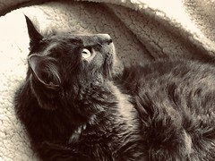 The Cat and The Moon 1 0f 2 (Cabinet of Old Secret Loves) Tags: cat moon mooncat williambutleryeats poem poetry literature uk british english poet night cold weather er snow spooky strange story storyteller annabelanger annabelle ghostales1957 ale witchballs witch familiar goals book 2019 1917