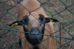 DSC_1565 (GelbGleb) Tags: животное фото зеленый green photo animal colored цветное