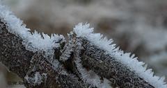 Rijp op stam. (m.ritmeester) Tags: ngc naturelovers nederland natuur hoenderloo hoge veluwe wit bruin tak ijsnaalden