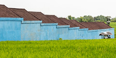 At the end of the day (A Different Perspective) Tags: bali blue building corrugated field green hut rice roof wall