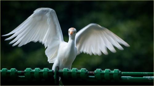 angel wings on a garbage bin