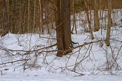 The Wild Wood (SunnyDazzled) Tags: woods trees winter forest snow evening nature landscape pennsylvania bark branches tomscreek hike delawarewatergap quiet