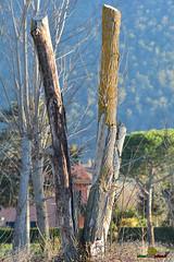 A-LUR_3788 (OrNeSsInA) Tags: aly passignano panicale natura panorami campagma campagna landescape trasimeno nikon canon airone airon cormorano spettacolo birdwatching albero cielo animale mare acqua uccello