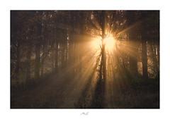 Stellar Shower (Max Angelsburger) Tags: dark wood light beams tyndall rays fog mist tree stellar shower branches glow moody badenwürttemberg herbst autumn 2018 photorupt fiftyshadesofnaturestunningshotsigersmoodadventurethatislifenaturebrilliancekeepitwildnaturesultansmastershotsourplanetdailystayandwander