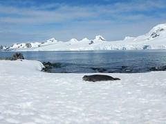 Seal, Elephant Island (Mulligan Stu) Tags: antarctica elephantisland antarcticpeninsula chinstrappenguin