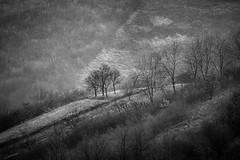 Trees (Ivan Vranić hvranic) Tags: svetanedelja svetonedeljskibreg blackwhite nature telephoto compressedview