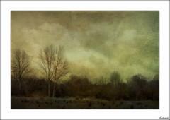 Un otoño diferente (V- strom) Tags: paisaje landscape texturas textures árbol tree cielo sky nubes clouds nikon nikon2470 nikond700 huawei vstrom vegetación vegetation campo countryside