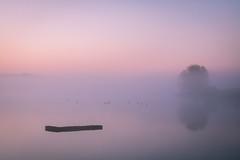 Disconnected (johnkaysleftleg) Tags: hurworthburnreservoir countydurham hartlepool mist morning morninglight sunrise minamalisim birds reflections canon760d sigmaaf1770mmf2845dcmacro