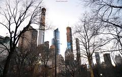 NYC - Twilight skyline   # 059 (ricardocarmonafdez) Tags: nyc newyork ciudad city cityscape urbanscape arboles trees skyline rascacielos skyscrapers ramas branches crepúsculo twilight dusk ricardocarmonafdez nikon d850