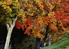 Autumn in the cemetery (ringwaldpeter) Tags: autumn trees cemetery silence nature seasons colors yellow green beauty wonderful plants nikond5300 nikkor 18140mm