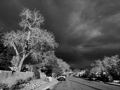 My neighborhood in Albuquerque with iPhone.  New Mexico, USA. (cbrozek21) Tags: street trees light sky cloud sunsetlight bw blackandwhite crazytuesday monochrome albuquerque iphone