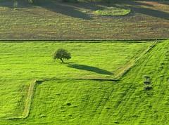feenkreis (lualba) Tags: fairycircle tree landscape green spring frühling grün feenkreis baum monsaraz alentejo portugal