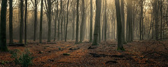 Speulderbos - a morning walk through the forest (Toon E) Tags: 2019 holland netherlands nederland speulderbos veluwe garderen drie forest woods trees fog mist morning sunrise outdoor sony a7rii sonyfe2470mmf4