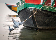 Pigeons on Boat (Wits End Photography) Tags: water boat reflection pigeons varanasi india marine nautical vehicle