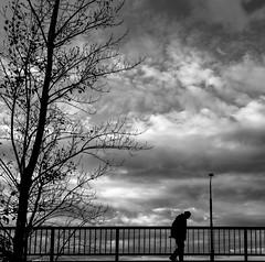 Better Times (CoolMcFlash) Tags: street streetphotography candid silhouette cloudy overcast tree person walking vienna fujifilm xt2 sad weather cloud storm strase kontur bewölkt wolken sturm unwetter baum gehen wien mood stimmung trauer fotografie photography bw bnw blackandwhite monochrome sw schwarzweis xf1024mmf4 r ois