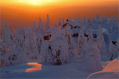 Orange Winterglow (Sandra OTR) Tags: finland lapland suomi tykky trees forest sunset sunrise sunshine winter snow snowy cold weather