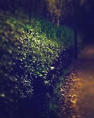 (txchris86) Tags: instagram ifttt nightshot illuminated laternlight plants pflanzen nature builtstructure dark edited