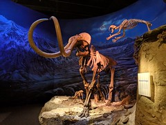 Sneak Attack! | Royal Tyrrell Museum | Alberta, Canada (TheNovaScotian1991) Tags: