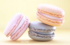 Macaron Monday (Inky-NL) Tags: macromondays pastel sweets candy macaron macarons soft softcolors yummie zoet lekkernij texture