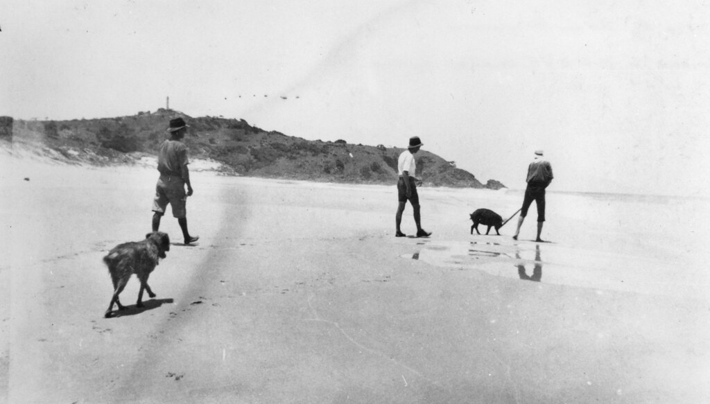 Group of men with a captured wild pig on the beach at Moreton Island, ca. 1920