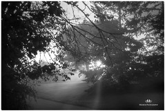 SEPTEMBER FOG 15NM1_4769_004611-1-222 (Nick and Karen Munroe) Tags: fog foggy winterfog mist misty fogpatches trees tree landscape landscapes dawn sunrise morning daybreak sunlight sunburst sun sunshine starburst karenick23 karenick karenandnickmunroe karenandnick munroe karenmunroe karen nickandkaren nickandkarenmunroe nick nickmunroe munroenick munroedesigns photography munroephotoghrpahy munroedesignsphotography nature brampton bramptonontario ontario ontariocanada outdoors canada d750 nikond750 nikon nikon2470f28 2470 2470f28 nikon2470 nikonf28 f28 blackandwhite bw blackwhite bandw monochrome mono